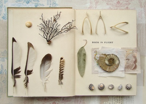 feathers and bones