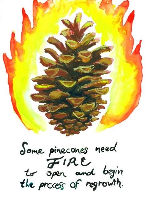serotinous pine 72